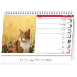 Stolní kalendář Kočky - Mačky 2020