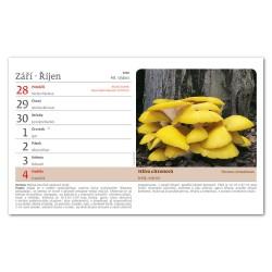 Stolní kalendář 2020 Na houbách