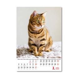 Nástěnný kalendář 2021 - Kočičky/Mačičky
