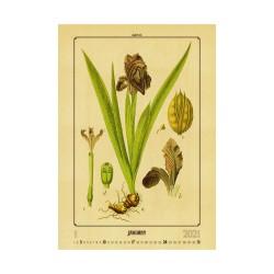 Nástěnný kalendář 2021 - Herbarium