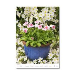 Nástěnný kalendář 2021 - Flowers