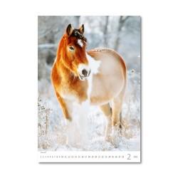 Nástěnný kalendář 2021 - Horses Dreaming