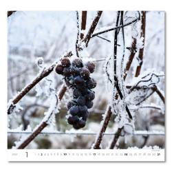 Nástěnný kalendář 2021 - Wine