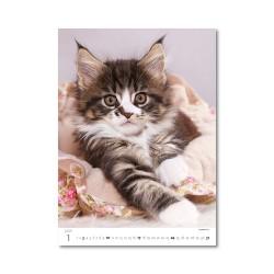 Nástěnný kalendář 2021 - Kittens/Katzenbabys/Koťátka/Mačičky