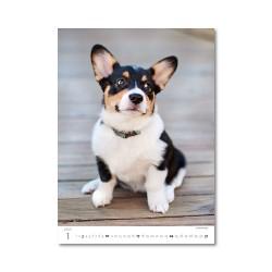Nástěnný kalendář 2021 - Puppies/Welpen/Štěňátka/Šteniatka