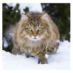 Nástěnný kalendář 2021 - Cats