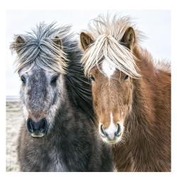 Nástěnný kalendář 2021 - Horses