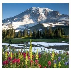 Nástěnný kalendář 2021 - Wild Flowers