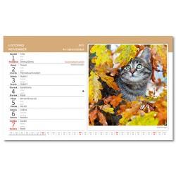 Stolní kalendář 2021 - Kočky/Mačky