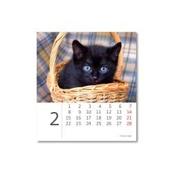 Stolní kalendář 2021 - Mini Kittens