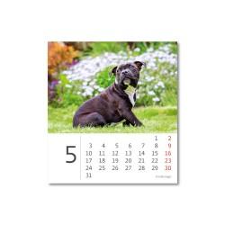 Stolní kalendář 2021 - Mini Puppies