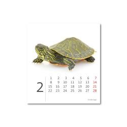 Stolní kalendář 2021 - Mini Pets