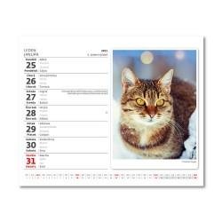 Stolní kalendář 2021 - MiniMax Kočičky/Mačičky