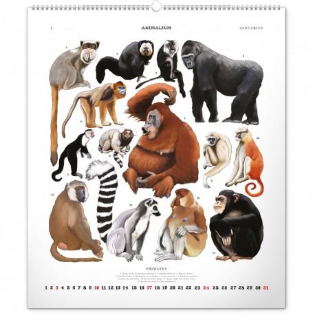 Nástěnný kalendář 2021 Animalium – Lucie Jenčíková