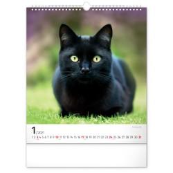 Nástěnný kalendář 2021 Kočky
