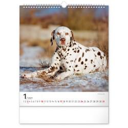 Nástěnný kalendář 2021 Psi