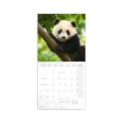 Nástěnný poznámkový kalendář 2021 Pandy
