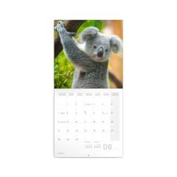 Nástěnný poznámkový kalendář 2021 Koaly