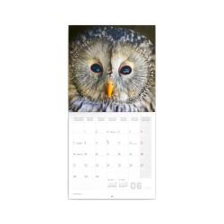 Nástěnný poznámkový kalendář 2021 Sovy
