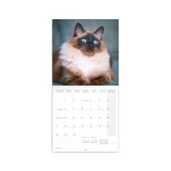 Nástěnný poznámkový kalendář 2021 Kočky