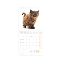 Nástěnný poznámkový kalendář 2021 Koťata