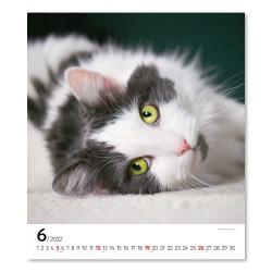 Nástěnný kalendář 2022 Kočky
