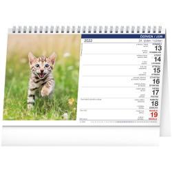 Stolní kalendář 2022 Kočky - Mačky CZ/SK