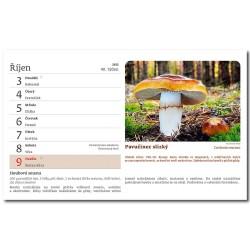 Stolní kalendář 2022 - Na houbách