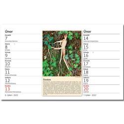 Stolní kalendář 2022 - Zdraví z přírody