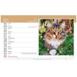 Stolní kalendář 2022 - Kočky/Mačky
