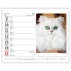 Stolní kalendář 2022 MiniMax - Kočičky/Mačičky