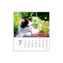 Stolní kalendář 2022 - Mini Kittens