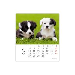 Stolní kalendář 2022 - Mini Puppies