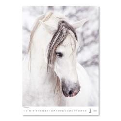 Nástěnný kalendář 2022 - Horses Dreaming