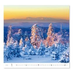 Nástěnný kalendář 2022 - Forest/Wald/Les
