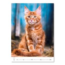 Nástěnný kalendář 2022 - Kittens/Katzenbabys/Koťátka/Mačičky