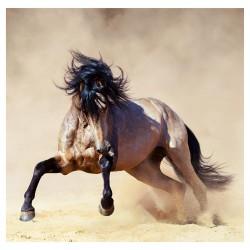 Nástěnný kalendář 2022 - Horses