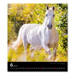 Nástěnný kalendář 2022 Koně