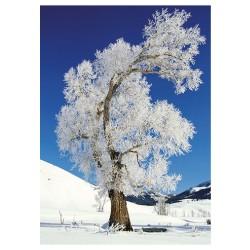 Nástěnný kalendář 2020 Stromy