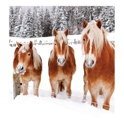 Nástěnný kalendář 2020 Koně