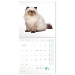 Nástěnný kalendář 2020 Koťata