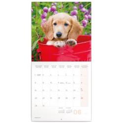 Nástěnný kalendář 2020 Psi