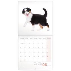 Nástěnný kalendář 2020 Štěňata